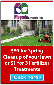 Magenta LawnCare Plus